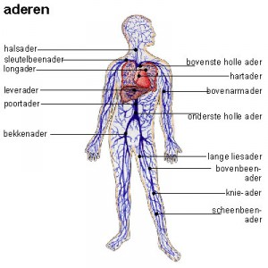 aderen of aders