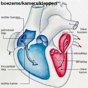 Ablatie van het hart